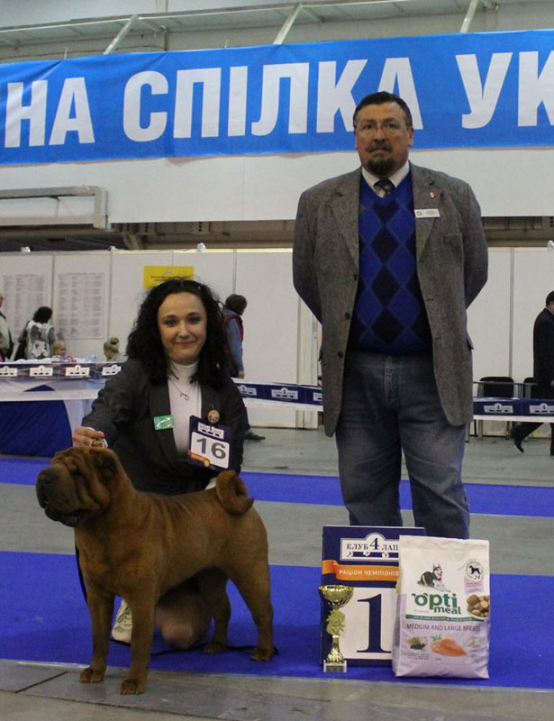 champion of breed 2015