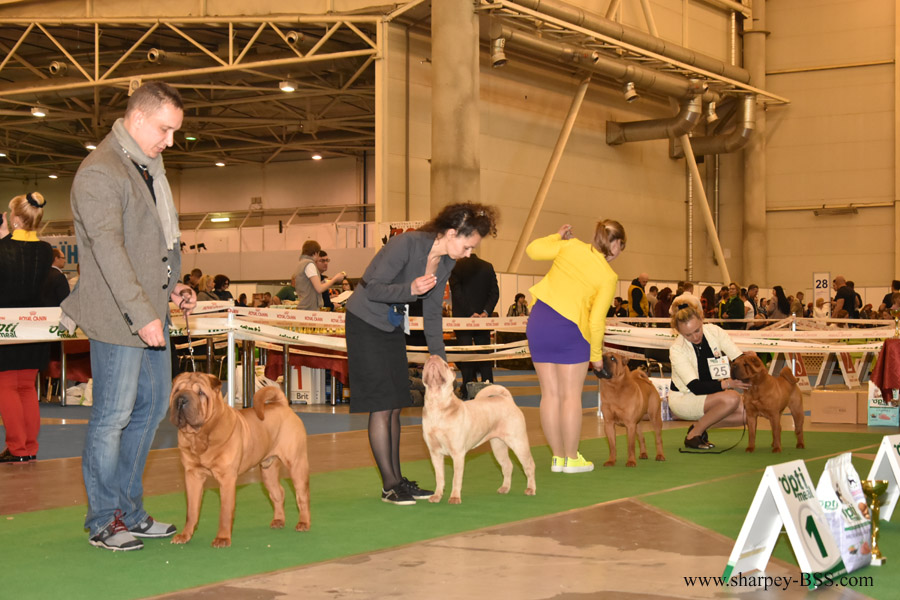 ch best of breed 1
