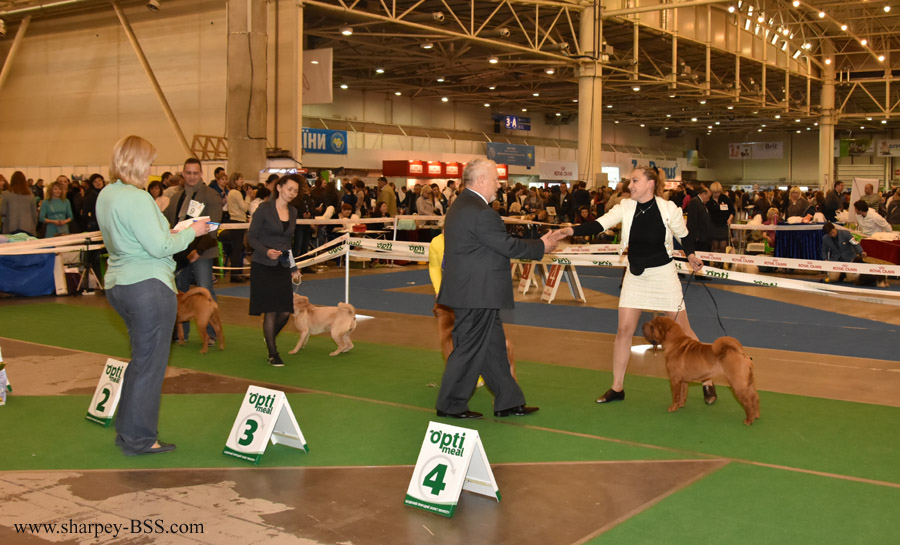 ch best of breed 4